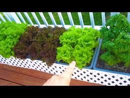 container garden update 1 harvest layout varieties organic raw