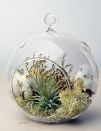 home decoration wonderful hanging air tillandsia plant in orb