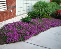 Backyard Ground Cover Options 47 Best Ground Cover Images On Pinterest Landscaping Ideas