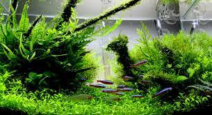 How To Aquascape A Planted Tank A Guide To Aquascaping The Planted Aquarium