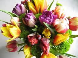 cut flowers cut flowers product range fernhill garden centre