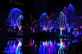 Zoo Lights Ohio by Christmas Lights At The Zoo Christmas Lights Decoration