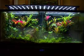 display vivarium tour and tips to grow a thriving tank youtube