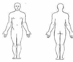 Human Anatomy Terminology Sections Of The Body Anatomy Anatomy Lab Unit 1 Anatomical