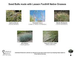 california native plant seeds seed balls earthshed solutions