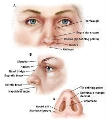 Surface Anatomy Eye Human Anatomy Anatomy Of Nose Free Gallery Simple Detail Ideas