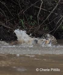 backyard birding in merida yucatan and beyond u2013 my jaguar journey