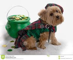 st patrick u0027s day dog with pot of gold stock photo image 45663890