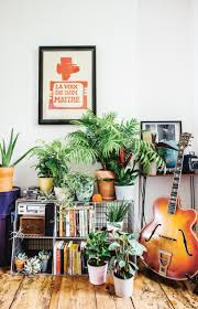 money tree plants our best tips for growing and care apartment