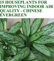 best plants for air quality 15 houseplants for improving indoor air quality nature pictures