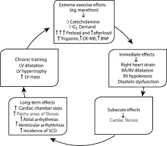 exercise and the cardiovascular system circulation research