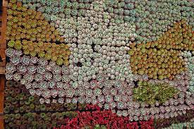 succulent table spotted far out flora