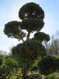 specimen trees shrubs garden barn
