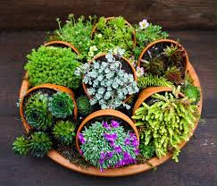Rock Garden Succulents I Can And I Will Do This Succulents Gifts I Can Make