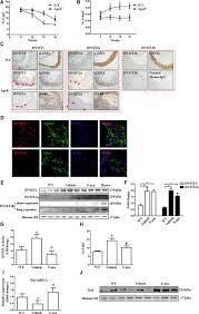 the yin u2013yang dynamics of dna methylation is the key regulator for