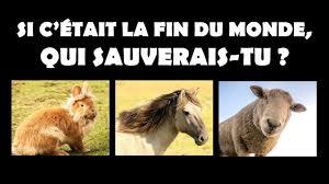 Quelle Race De Chien Choisir Test by Quel Chien Choisir Me Galerie Avec Quel Animal Me Correspond Photo
