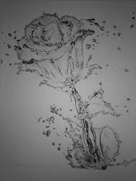 splashed rose what a heart touching beauty the world of creativity