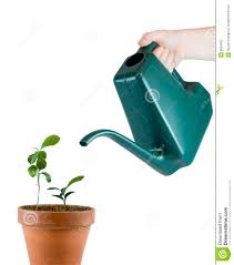 flower watering pot 46 unique decoration and self watering planter
