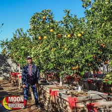 Best Fruit Trees For North Carolina - citrus u0026 fruit trees moon valley nurseries