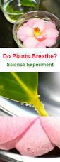 the 25 best respiration ideas on pinterest asthme medecin du