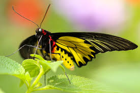 download wallpaper butterfly colorful close up hd background