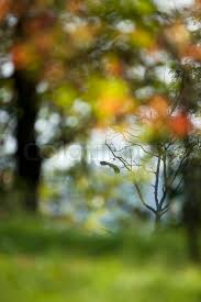 photography background odilon dimier altopress maxppp blurred outdoor with bird