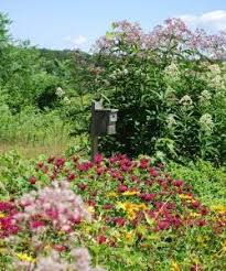 Flowering Shrubs New England - cisa new england wild flower society at nasami farm cisa