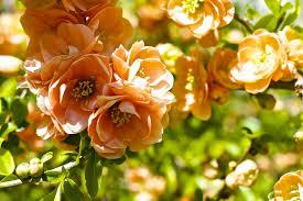 Orange Color by Flower Nature Orange Color Flower Flowers Wallpaper Hd Free