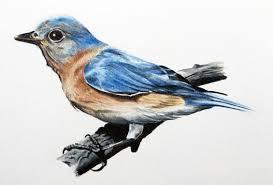 draw bird colored pencils