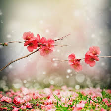 morning blossom wallpapers 8 best nature images on pinterest iphone backgrounds nature and