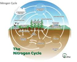 nitrogen cycling in agriculture cooperative extension