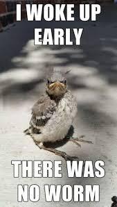 Goodmorning Meme - the 25 best funny good morning memes ideas on pinterest derp
