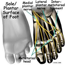 Foot Anatomy Nerves Anatomy Of The Foot Infobarrel