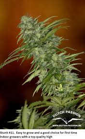 Plants Easy To Grow Indoors The First Time Grower Growing Weed Indoors U2026 Easily Dutch Passion