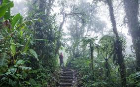 Tropical Clothes For Travel What To Wear When Hiking In Tropical Climates