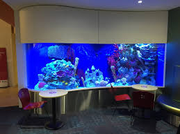 Custom Fiberglass Interior Fiberglass Reinforced Plastic Aquarium At Childrens Hospital