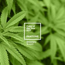 pantone u0027s color of the year is greenery hilife cannabis creative