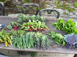How To Grow A Vegetable Garden In Pots Comfortable How To Grow Your Own Vegetable Garden Ideas