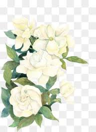 white flower white flower png images vectors and psd files free on