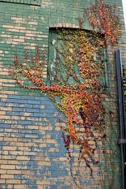 Painting A Wall To Look Like Brick Painted Brick And Autumn Vine U2013 Ruth E Hendricks Photography