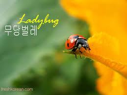 ladybug in korean u2013 fresh korean