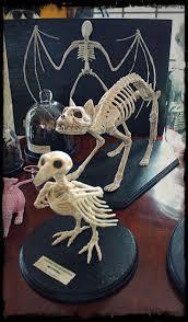 halloween laboratory props 248 best laboratory ideas oddities specimens images on pinterest