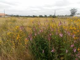 vacant land plots for sale in lusaka