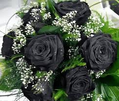 real black roses amazing bouquet of black roses roses black roses