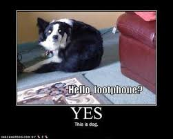 Dog Phone Meme - pretty dog on phone meme hello footphone yes this is dog internet