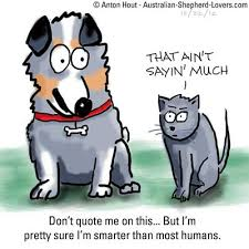 cat with australian shepherd dog quotes