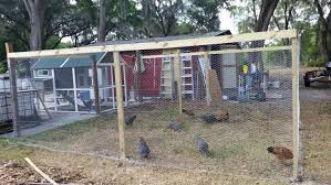 tsc big green coop with new run backyard chickens