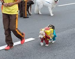 Halloween Costumes Husky Dog Awesome Halloween Costumes Pets