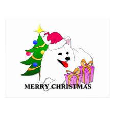 american eskimo dog nz american eskimo dog christmas postcards zazzle co nz