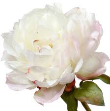 Faux Peonies Luxury Artificial Mixed Peonies Bouquet Amaranthine Blooms